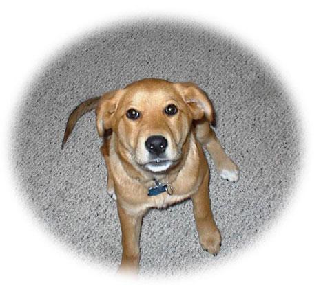 Houston's Best Pet Sitters - 12 Photos & 13 Reviews - Dog ...