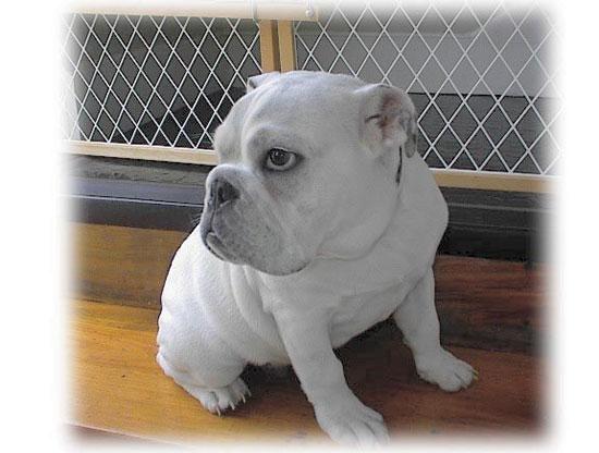 Houston's premier dog walking & pet sitting - The Dog Walker